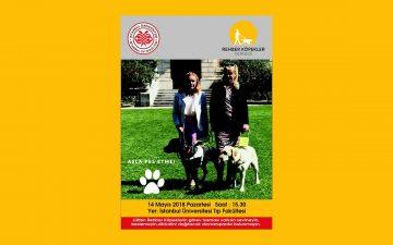 Farklı Dostlarımız; Rehber Köpeklerin Hayatımızdaki Yeri
