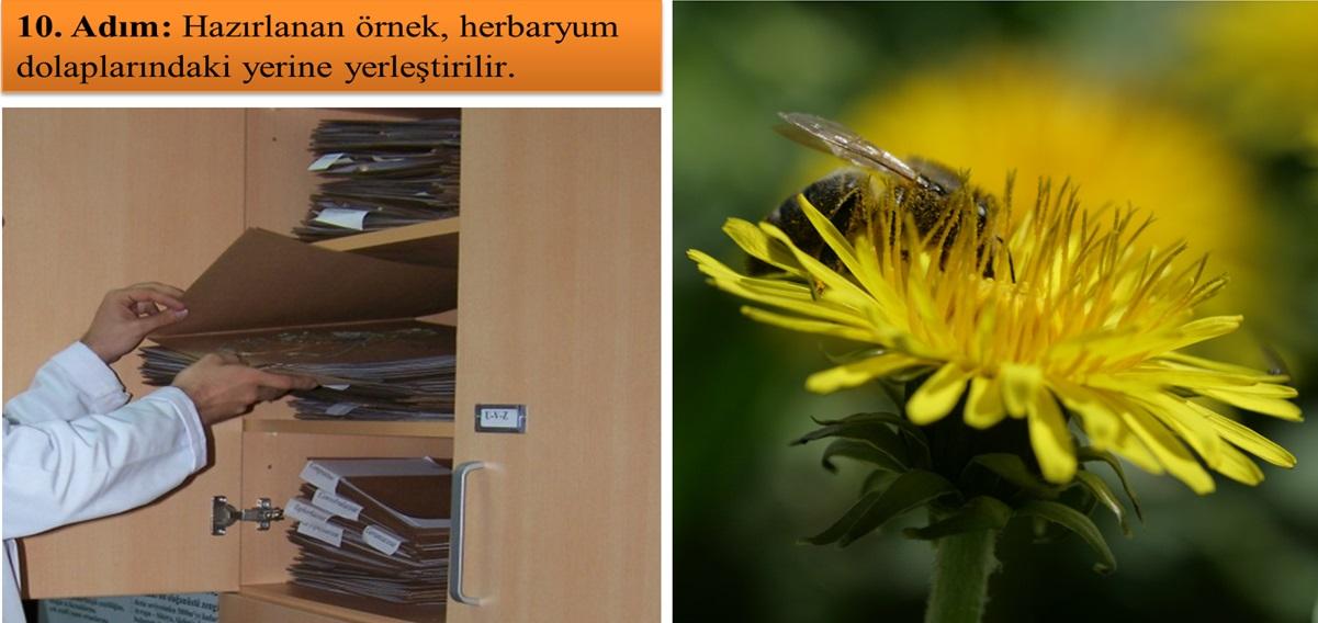 Ballı_Bitki_herbaryumu7