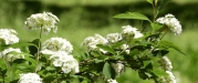polen-alerjisi-kaliteli-yaama-engel