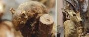trkiyenin-lk-zooloji-mzesi-ziyaretilerini-bekliyor